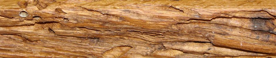Il legno di recupero il fascino dei segni del tempo